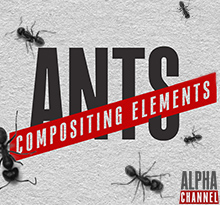 Ants Compositing Elements Pack Bogz
